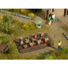 13221 12 Pflanzen Rote Beete für Ihr Gemüsebeet - Noch H0