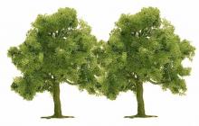 2 Obstbäume Busch H0 6649
