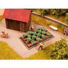 13217 16 Pflanzen Weißkohl für Ihre Gemüseplantage - Noch H0